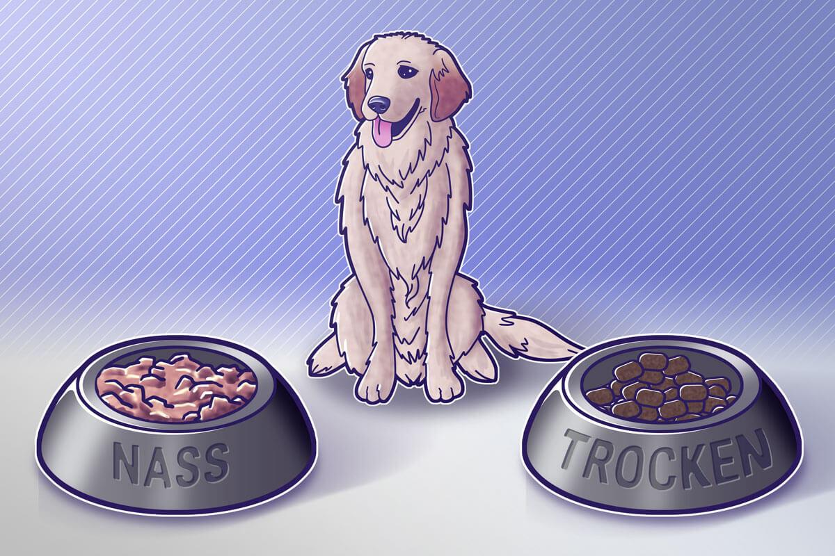 Wahl zwischen Nass- und Trockenfutter