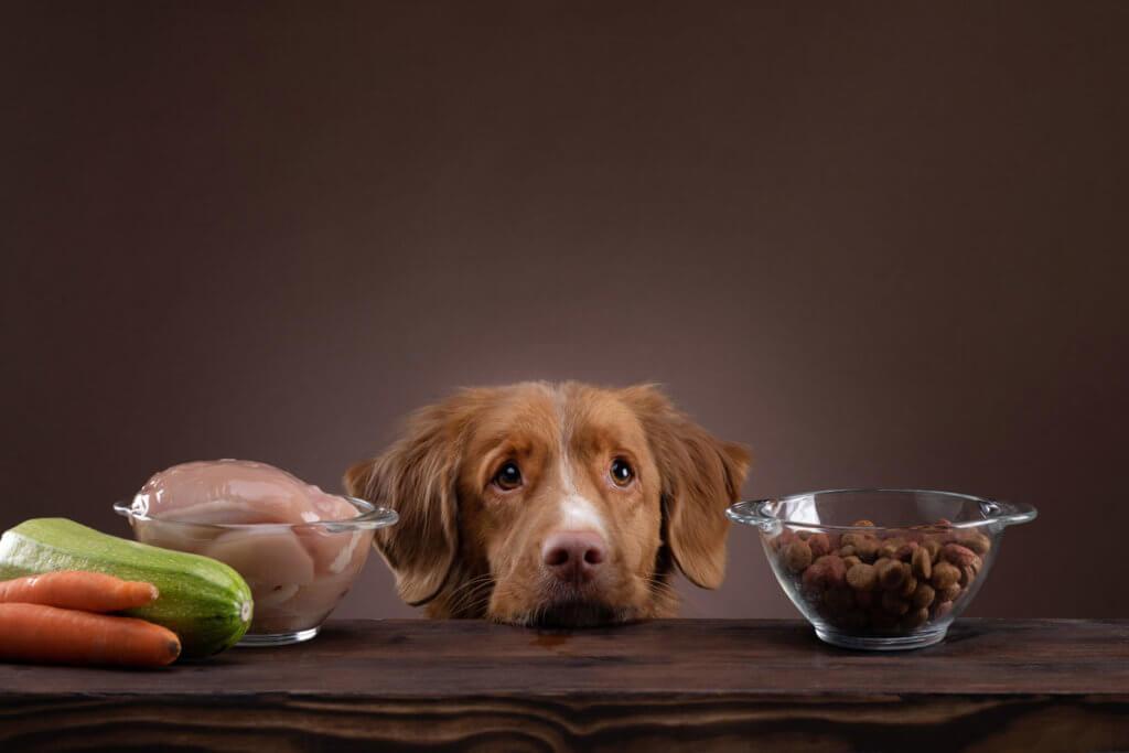 Trauriger Hund mit Essen
