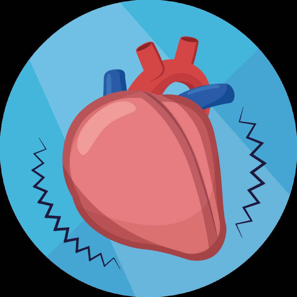 Herz- und Kreislauferkrankungen