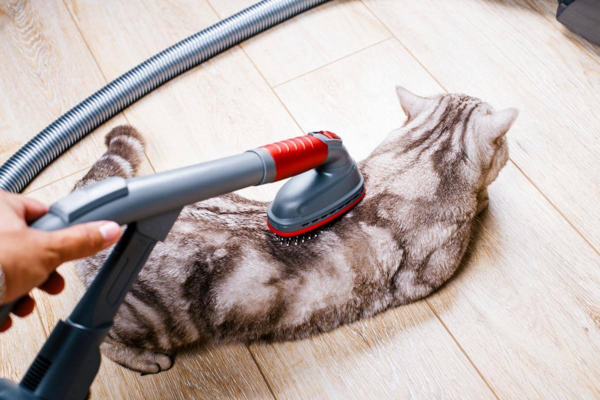 Katze absaugen