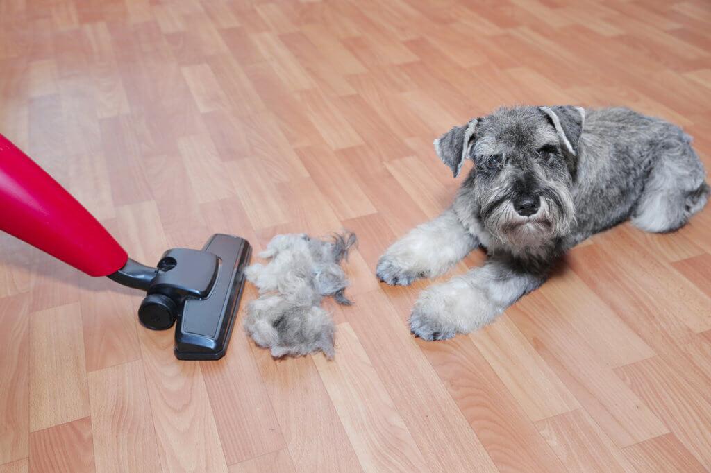 Hund auf Pakett und Haare werden gesaugt