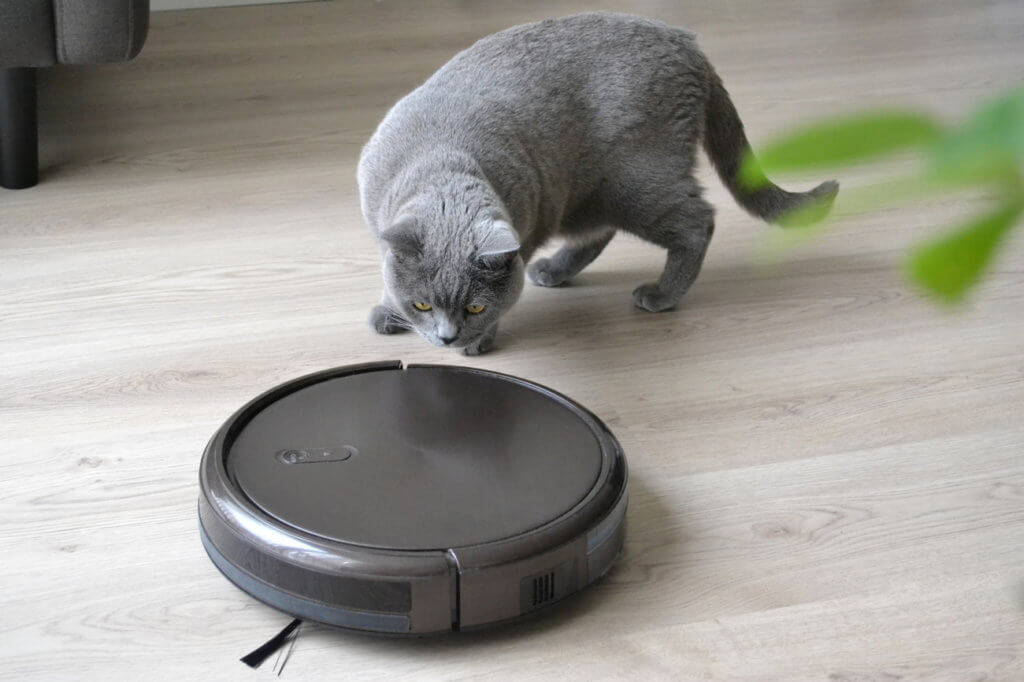 Katze beobachtet Staubsauger-Roboter