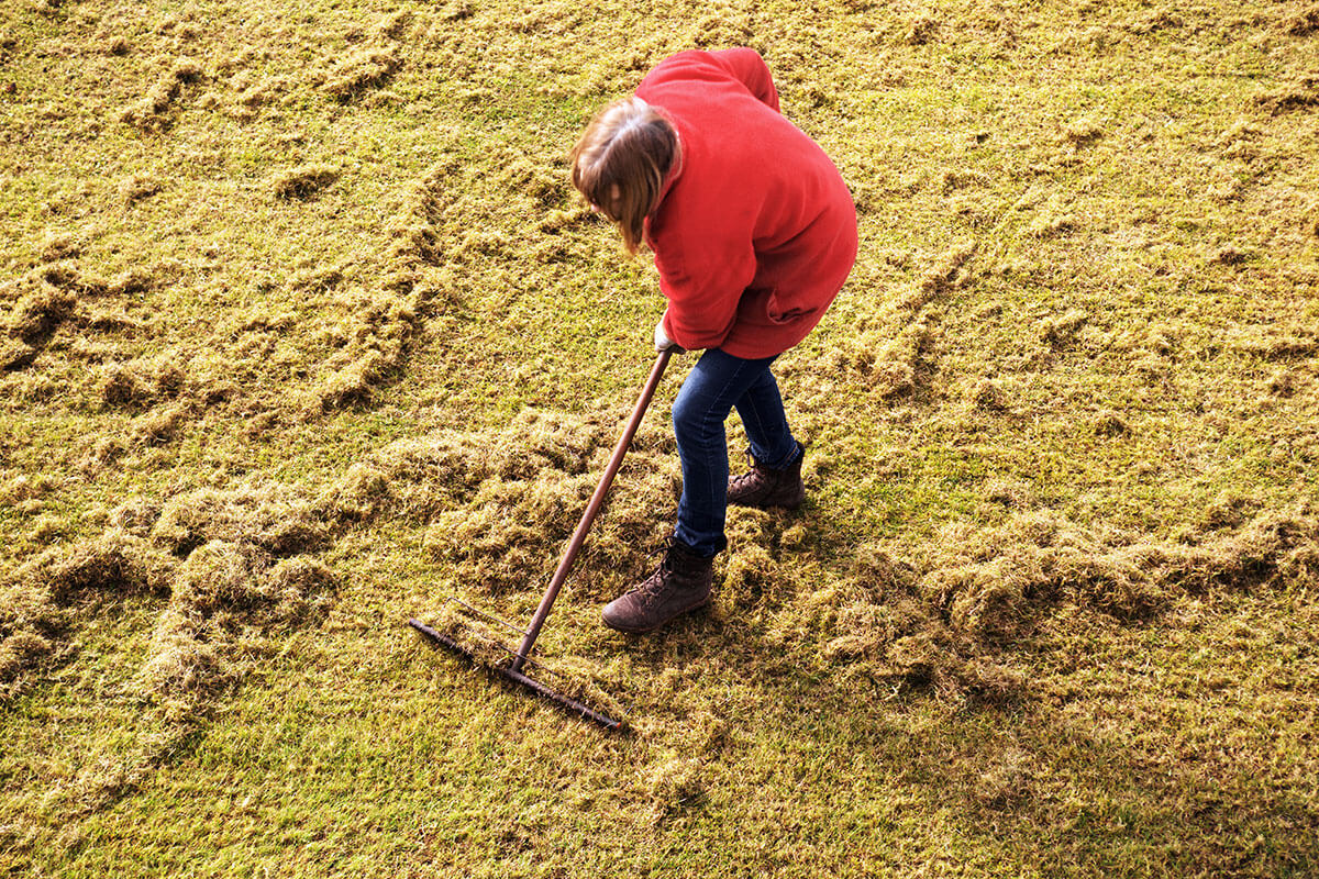 Frau harkt den Rasen